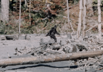 bigfoot steppin